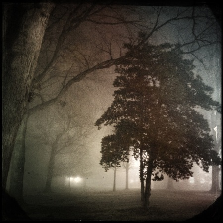 Foggy Morning Walk by Carla Kucinski