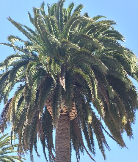 perfect-palm-tree