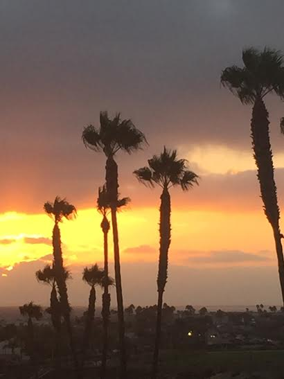 tall-skinny-palm-trees