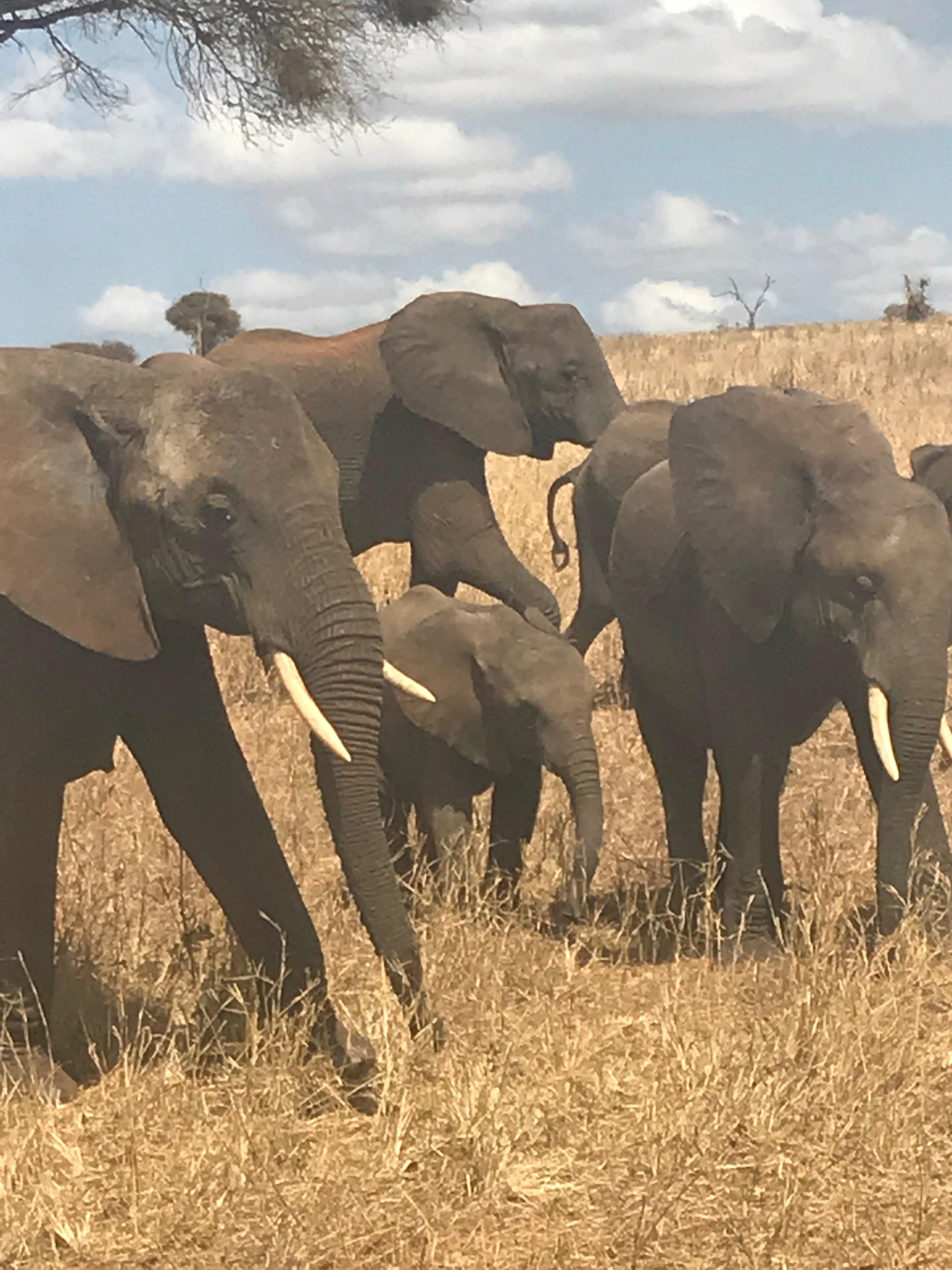 AFRICA ELEPANT FAMILY.JPG
